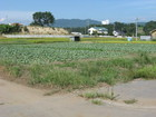 サムネイル:瀬戸・リサーチパーク入口売農地